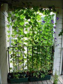 Cute and simple tiny patio garden ideas 57