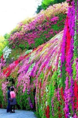 Stunning japanese garden ideas plants you will love 02