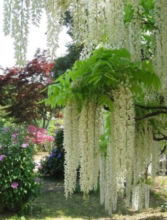 Stunning japanese garden ideas plants you will love 11