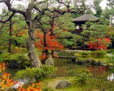 Stunning japanese garden ideas plants you will love 13