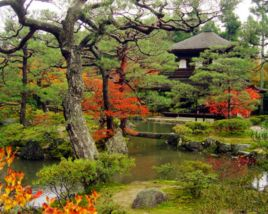 Stunning japanese garden ideas plants you will love 13