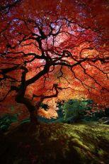 Stunning japanese garden ideas plants you will love 51