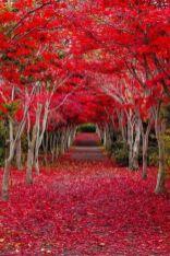 Stunning japanese garden ideas plants you will love 57
