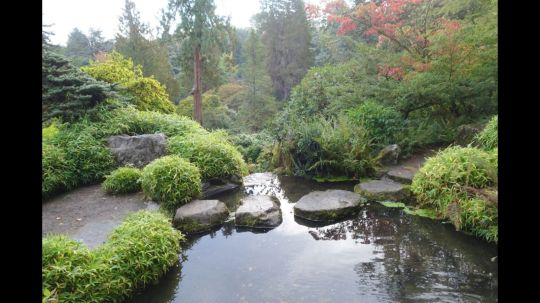 Stunning japanese garden ideas plants you will love 64