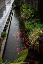 Stunning japanese garden ideas plants you will love 66