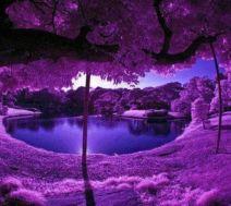Stunning japanese garden ideas plants you will love 71