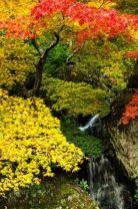 Stunning japanese garden ideas plants you will love 73