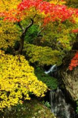 Stunning japanese garden ideas plants you will love 73