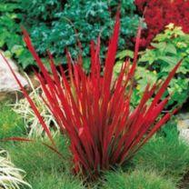 Stunning japanese garden ideas plants you will love 74
