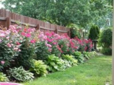 Diy backyard privacy fence ideas on a budget (56)