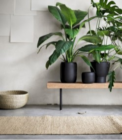 Stunning indoor plants ideas for your living room and bedroom 10