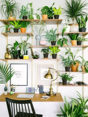 Stunning indoor plants ideas for your living room and bedroom 16