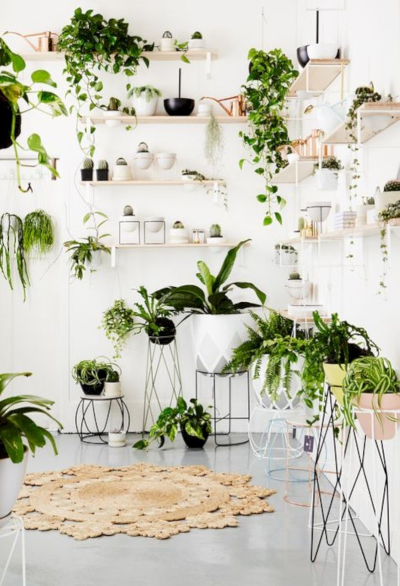Stunning indoor plants ideas for your living room and bedroom 19