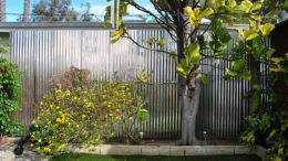 Easy and cheap backyard privacy fence design ideas 28