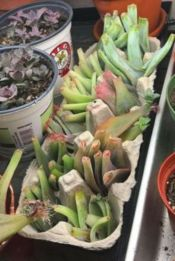 Creative diy indoor succulent garden ideas (1)