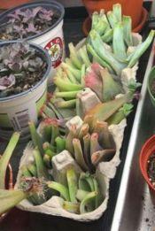Creative diy indoor succulent garden ideas (1)