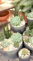 Creative diy indoor succulent garden ideas (13)