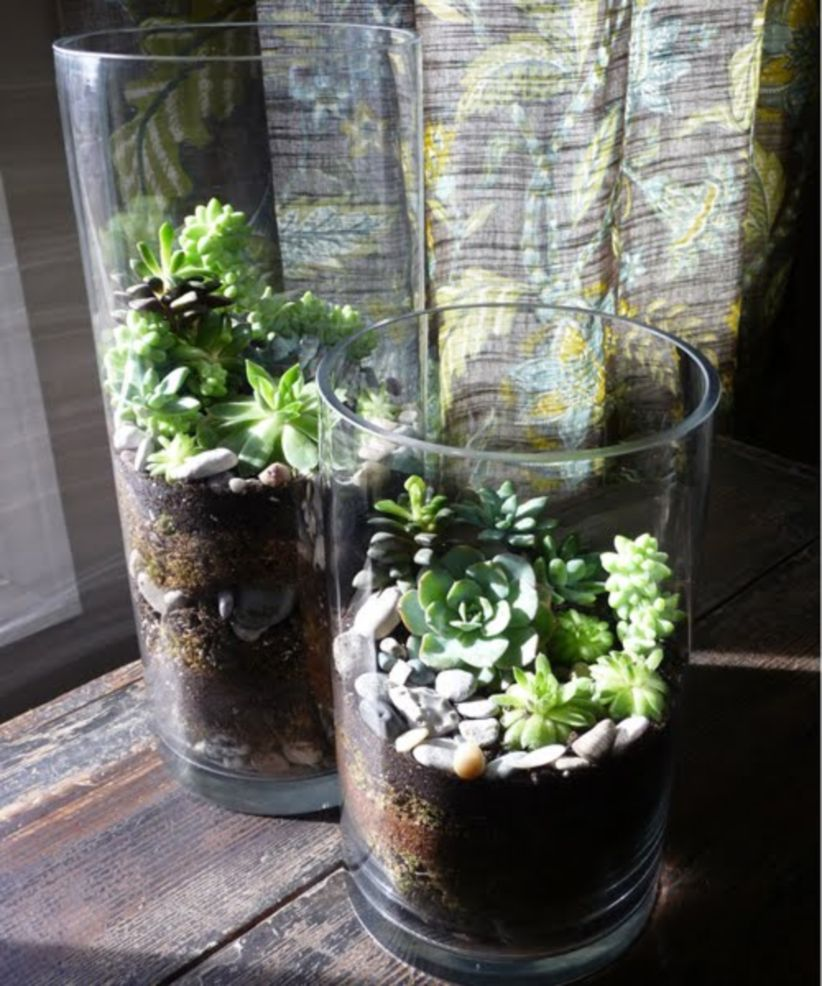 Creative diy indoor succulent garden ideas (23)