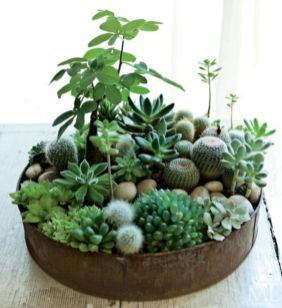 Creative diy indoor succulent garden ideas (27)