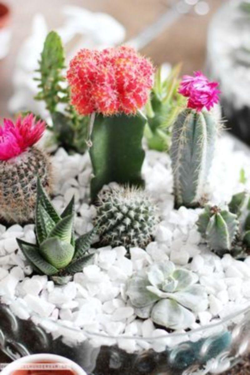 Creative diy indoor succulent garden ideas (30)