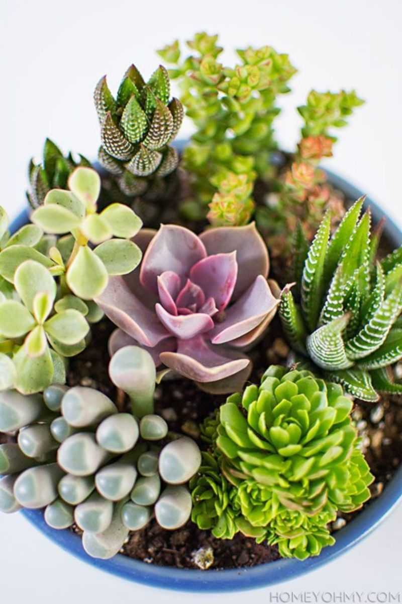 Creative diy indoor succulent garden ideas (41)