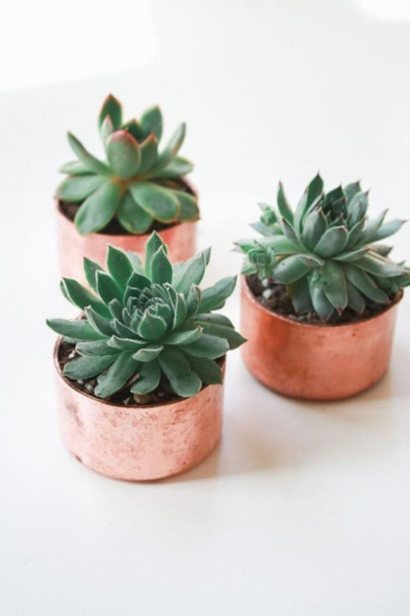 Creative diy indoor succulent garden ideas (6)