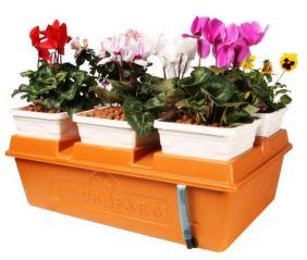 Creative diy indoor succulent garden ideas (7)