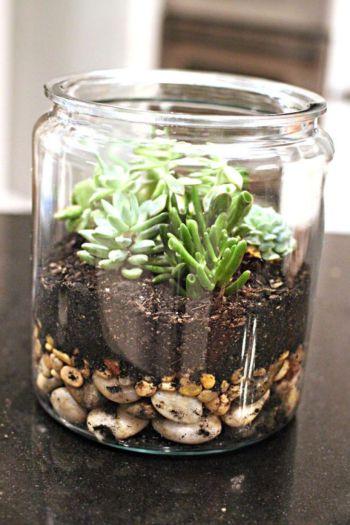 Creative diy indoor succulent garden ideas (9)