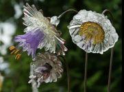 Brilliant garden junk repurposed ideas to create artistic landscaping 44