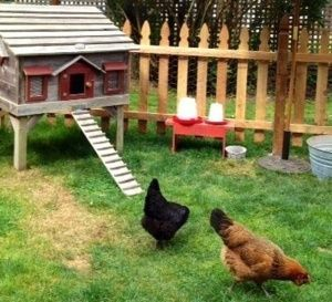 Extraordinary chicken coop decor ideas 11