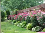 Impressive small front yard landscaping ideas 02