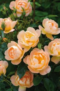 Impressive fall flowers to plant in your garden 11