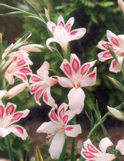 Impressive fall flowers to plant in your garden 12