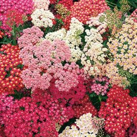 Impressive fall flowers to plant in your garden 28