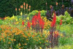 Impressive fall flowers to plant in your garden 34