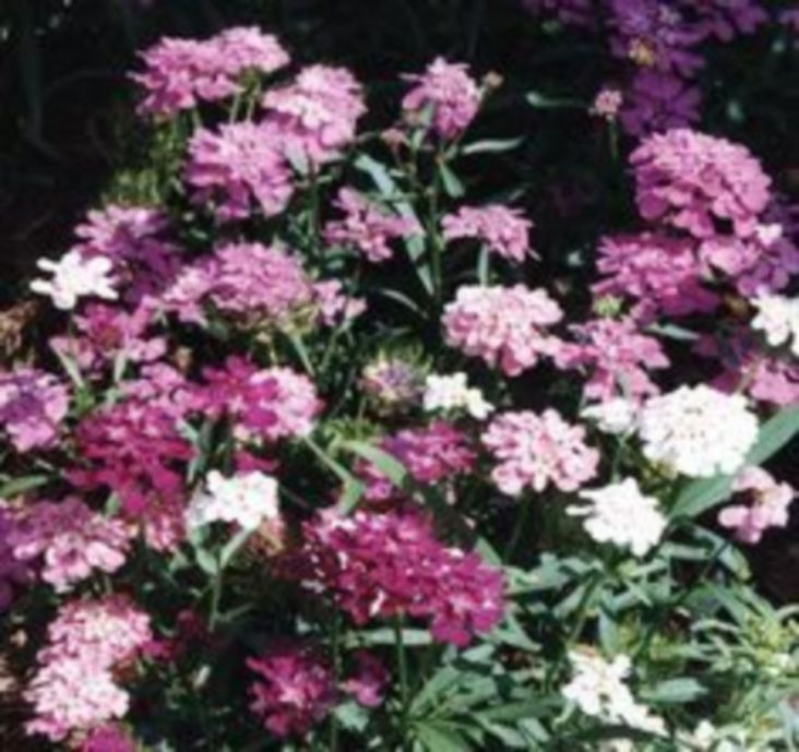 Impressive fall flowers to plant in your garden 45