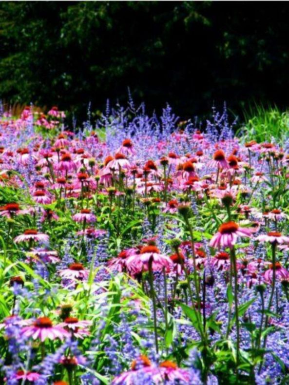 Impressive fall flowers to plant in your garden 53