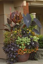 Impressive fall flowers to plant in your garden 54