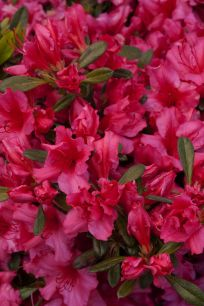 Impressive fall flowers to plant in your garden 56