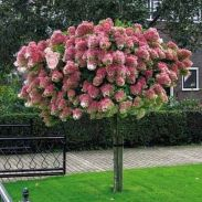 Lovely flowering tree ideas for your home yard 01