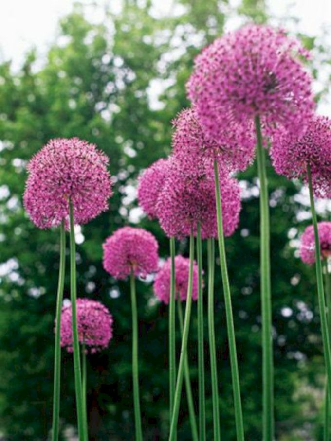 Lovely flowering tree ideas for your home yard 02