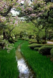 Lovely flowering tree ideas for your home yard 27