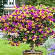 Lovely flowering tree ideas for your home yard 28