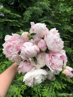 Lovely flowering tree ideas for your home yard 30