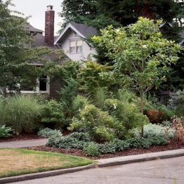 Lovely flowering tree ideas for your home yard 35
