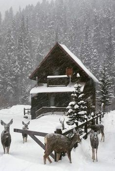 Awesome winter yard decoration ideas 33