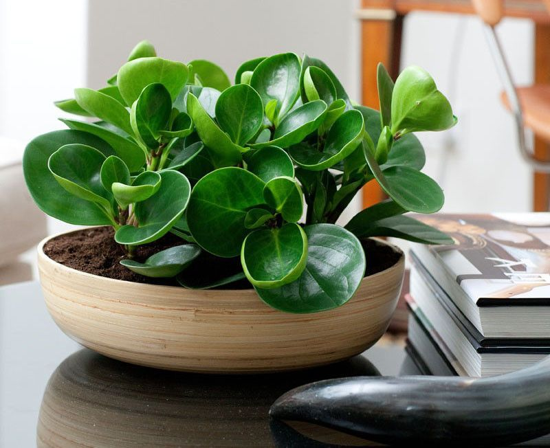 Cozy house plants decoration ideas for indoor 16