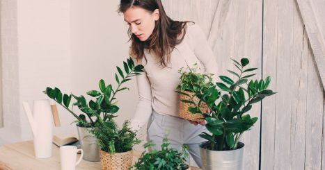 Cozy house plants decoration ideas for indoor 21