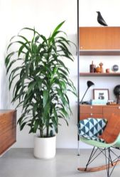 Cozy house plants decoration ideas for indoor 23