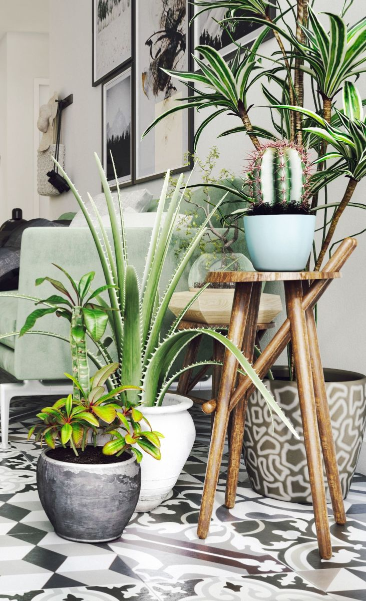 Cozy house plants decoration ideas for indoor 30